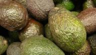 فوائد فاكهة الافوكادو للجنس