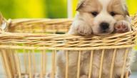 تصنيف:الحيوانات الأليفة