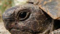 أمراض السلاحف