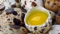 طريقة طبخ بيض السمان