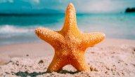 فوائد نجم البحر