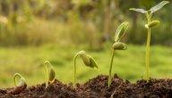 مظاهر النمو عند الكائنات الحية