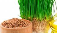 فوائد القمح لكمال الاجسام