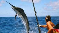 كيفية صيد السمك بالسنارة