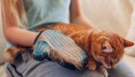 كيفية الاعتناء بالقطط