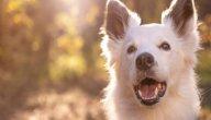حديث عن تربية الكلاب