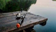 ما هو أفضل وقت لصيد السمك؟