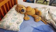 أسباب التبول عند الكبار أثناء النوم