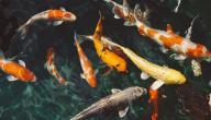 اشكال السمك واسمائها