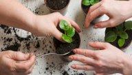 طرق الزراعة المنزلية