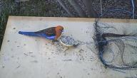 كيف تصنع مصيدة طيور بسيطة