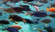ما معنى رؤية السمك في المنام