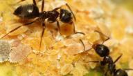 ما معنى رؤية النمل في المنام