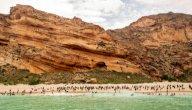 تعرّفي على غرائب وعجائب جزيرة سوقطرى اليمنية
