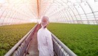 أهمية الزراعة المحمية