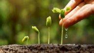 نباتات ذوات الفلقتين
