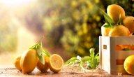 أنواع شجر الليمون