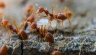 مكونات جسم النملة