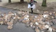 الآيس كريم في اليابان