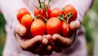 كيف أخزن الطماطم؟