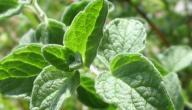 وصفات لإنقاص الوزن بالأعشاب