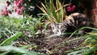 كيف تصيد القطط