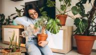5 أفكار للحصول على الخصوصية في حديقتك المنزلية