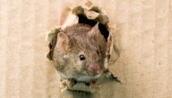 قصة فيلم الفأر الطباخ (خلطة بيطة بالصلصة): عائلي ممتع!