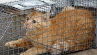 التخلص من القطط على السلم