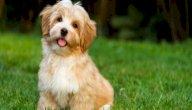 ماذا تعني رؤية الكلاب في المنام للعزباء؟