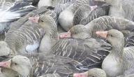 أجمل صيد طيور