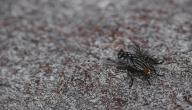 التخلص من الناموس والذباب