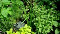 الأعشاب تساعد على الحمل