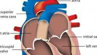 علاج خفقان القلب عند الحامل