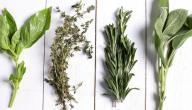 علاج رمد العين بالأعشاب