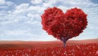 افضل الكلام عن الحب
