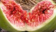 علاج نقص فيتامين د بالتين والزيتون