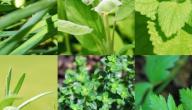 تصنيف:فوائد الأعشاب