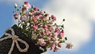 من أنواع الزهور