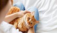 اضرار تربية القطط بالمنزل