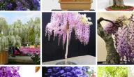 أسماء نباتات الزينة الخارجية