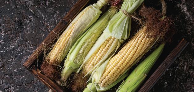 طريقة زراعة الذرة