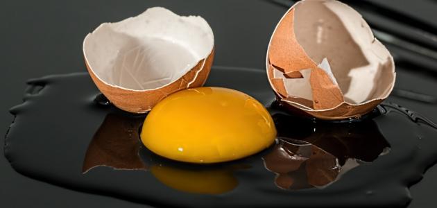 فوائد بياض البيض للعضلات