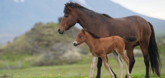 ماذا تسمى انثى الحصان حياتك