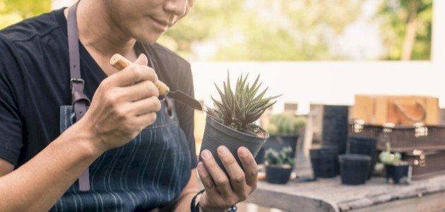 أنواع نبات الصبار