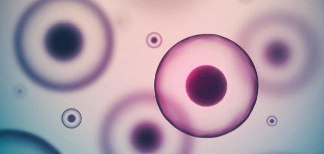 مما تتكون الخلية