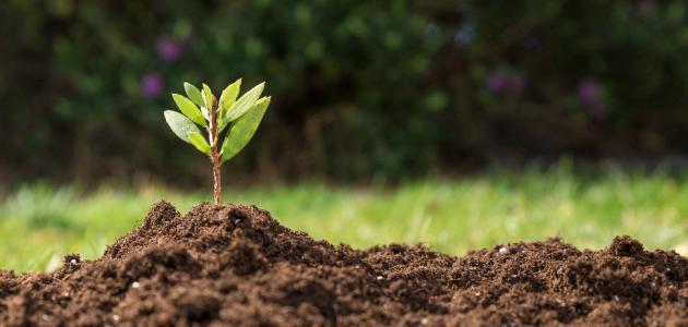 بحث علمي عن النباتات