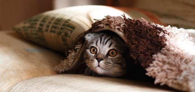 التخلص من رائحة القطط في المنزل