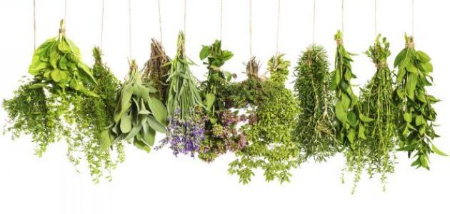 أعشاب لعلاج جفاف المهبل