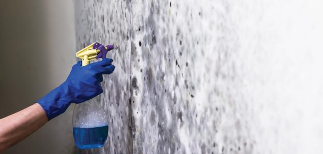 إزالة العفن عن الجدران